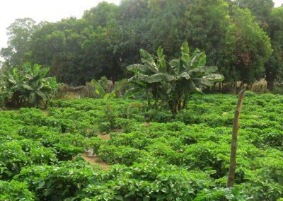 Soma community garden
